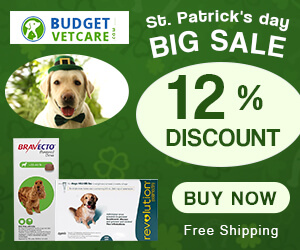 12% Off on Everything Luck is still with you! Get Earn Reward Points & Free Shipping.  Use Coupon Code: PATRICKS12