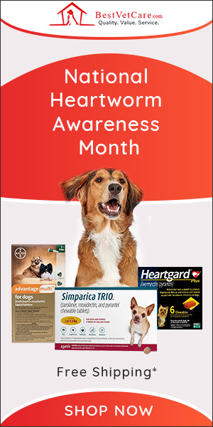 Heartworm Awareness Month Special Deal